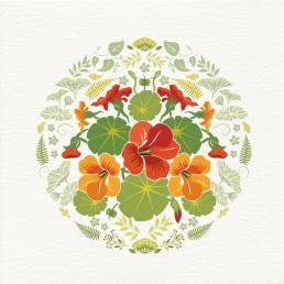 nasturtium flowers card